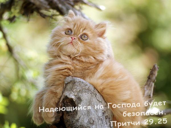 Фотоальбомы.  Животные.  Альбом: всякое пушистое).  Cat 36.jpg.  KrISSteen.